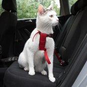 Trixie avto-oprsnica za mačke - Rdeč