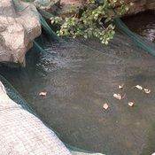 vidaXL Mreža za ribnik 12x6 m PE