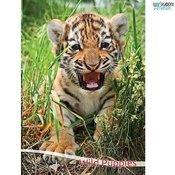 Zvezki A4 Domače divje živali