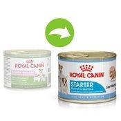 12x195g Royal Canin Starter Mousse Mother & Babydog hrana za pse