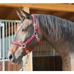 Ular Mustang M