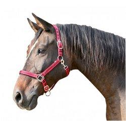 Ular Mustang L